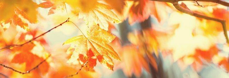 Autumn essentials at Melt