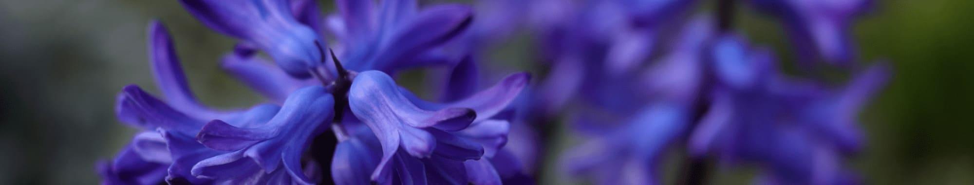Hyacinth Reed Diffuser