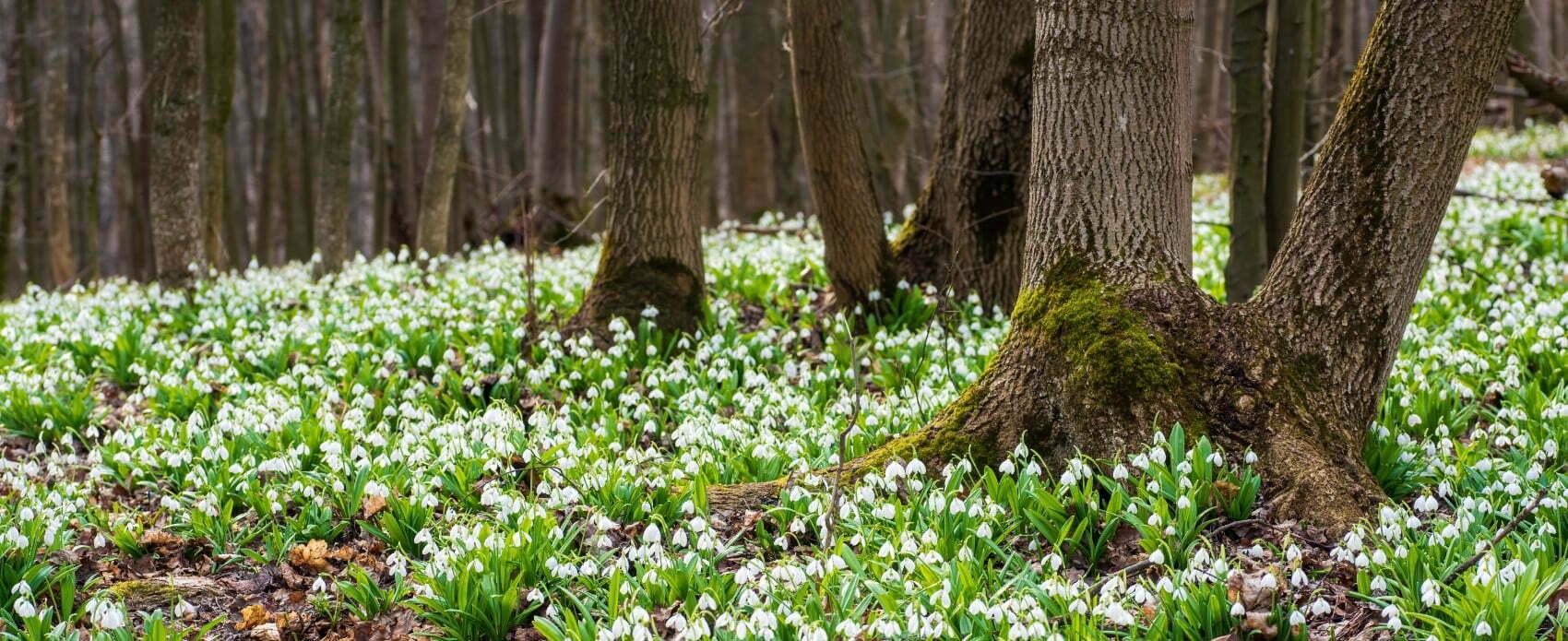 Spring arriving