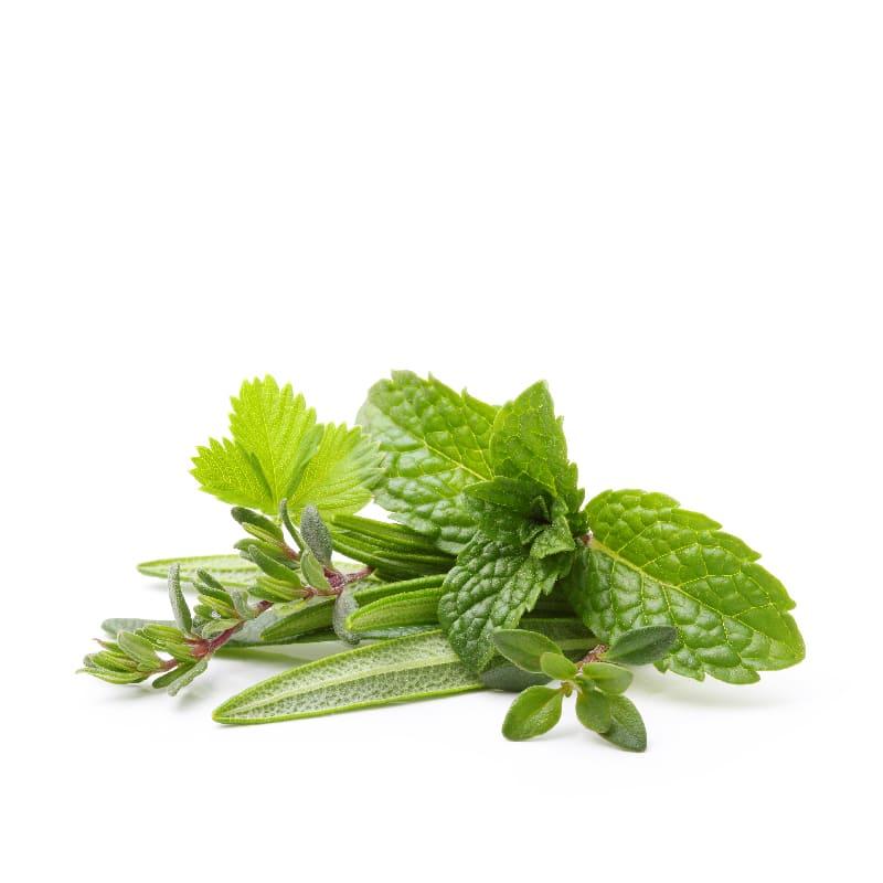 featured-ingredient_herbs
